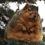 【糖尿病は肥満の人がなりやすい生活習慣病です。】
