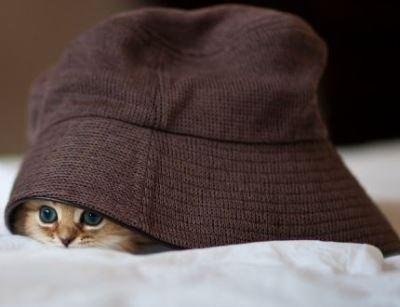 【隠れているつもりです】