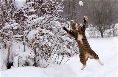 【寒くて眠れないから遊んでます!】