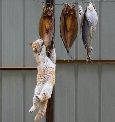 【魚の干物にはビタミンDが多く含まれています】